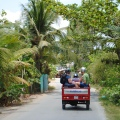 Tuk-tuk ride... watch out for the coconut palm tree branches!