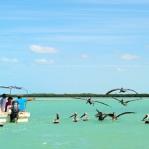 Alligator River cruise