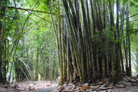 Bamboo grove... now that's proper Neighbours-Be-Gone hedge
