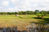 View on the rice fields from our hotel in Ubud