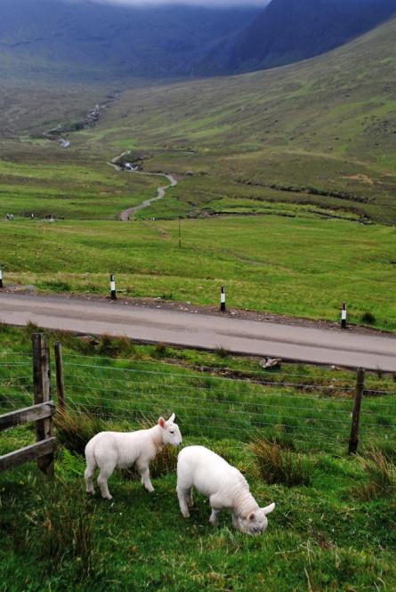 56_Isle-of-Skye_DSC_1042